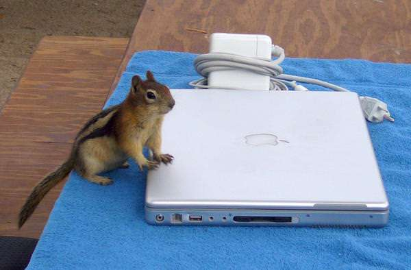 """He just e-mailed his buddy where he was hiding the nuts. Let's roll!"""
