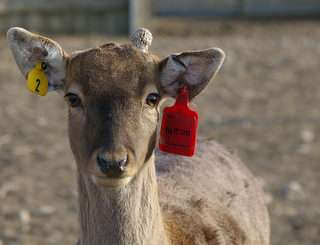 Tagged animal