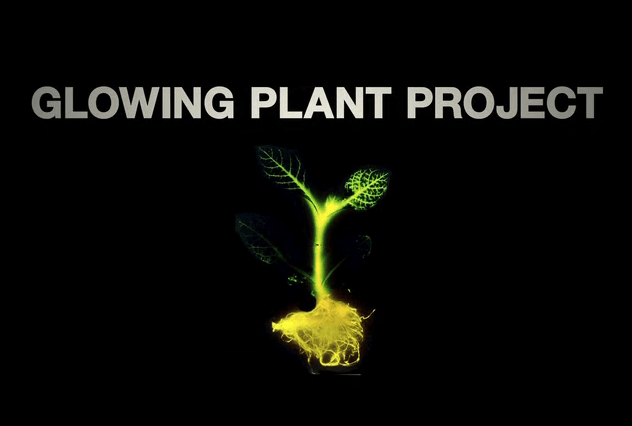 Glowing Plant