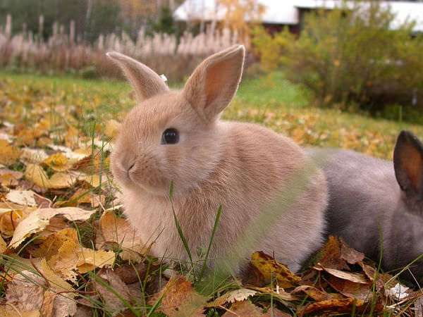 I admit that I chose to blog about this as an excuse to look at cute bunny photos. Dawww!