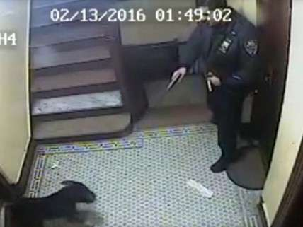 NYPD shoots dog