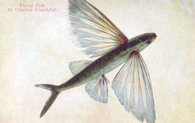 fish fly to syria
