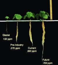 CO2 Plants