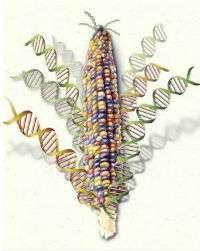 CRISPRCorn