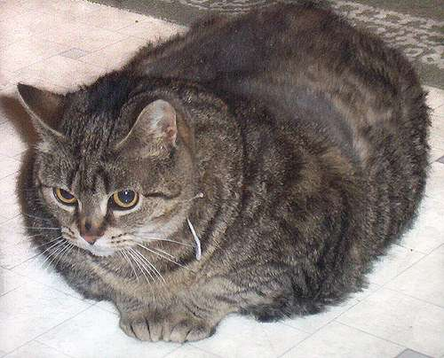 One fat cat