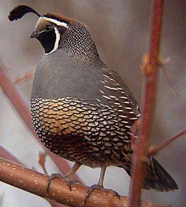 O what a beautiful bird am I.