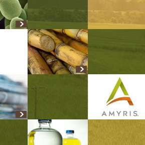 "Amyris: The name makes perfect sense if you pronounce it ""Am I rice?"""