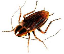 It's the students' fault for calling this a cucaracha instead of a cockroach.