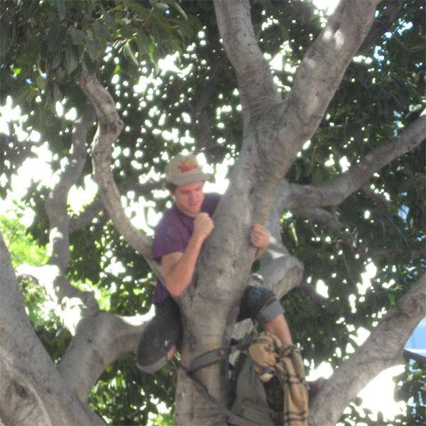 Occupy L.A. participant would rather live in a tree than work. And who can blame him on such a beautiful day?