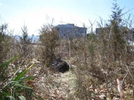 Feral cat on one of the properties condemned as a result of the Kelo case, March 2011. Photo by Jackson Kuhl.